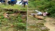 जखमी बिबट्याचा फोटो काढणं पडलं महाग, थोडक्यात वाचले तरुणाचे प्राण (Watch Video)