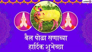 Bail Pola 2019 Wishes: आपले अन्नदाते शेतकरी बांधवांना Whatsapp Status, Greetings, Messages च्या माध्यमातून द्या बैल पोळा सणाच्या मराठमोळ्या शुभेच्छा