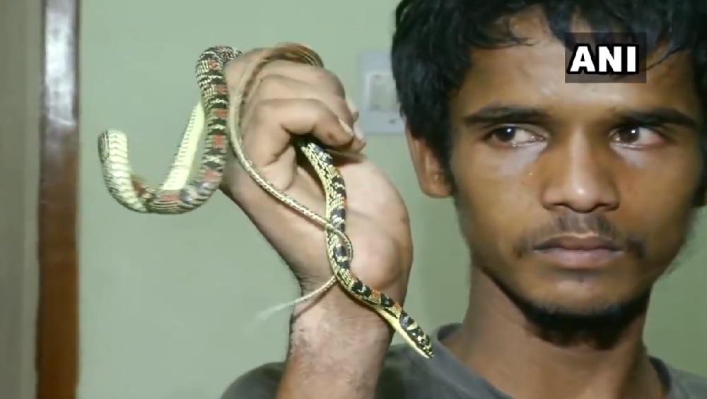 व्हिडिओ: उडणारा साप दाखवून 'तो' करायचा उदरनिर्वाह; भुवनेश्वर वन विभागाने केली कारवाई