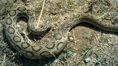 मुंबई: शॉपिंग मॉलच्या बाहेर उंदरांना पकडण्यासाठी ठेवले ग्लू पॅड, अडकला गेला विषारी साप