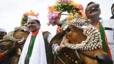 मुख्यमंत्री देवेंद्र फडणवीस यांनी साजरा केला हिंगोली मध्ये  बैल पोळ्याचा सण