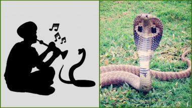 Nag Panchami 2019: नागपंचमी सणानिमित्त जाणून घ्या भारतात आढळणाऱ्या विषारी सापांच्या खास प्रजाती