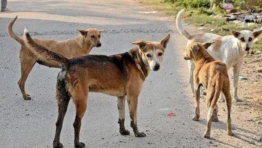 भिवंडी येथे भटके कुत्रे मोकाट, एकाच दिवशी दहा मुलांना चावल्याने परिसरात भीतीचे वातावरण