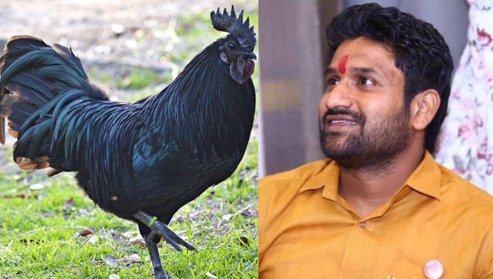 कडकनाथ कोंबडी घोटाळा: पाटण येथे गुन्हे दाखल; राज्यमंत्री सदाभाऊ खोतांचा मुलगा संशयित नाही, पोलिसांचा यू टर्न