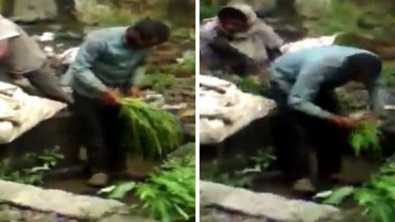 अंबरनाथ: गटाराच्या पाण्याने भाज्या धुतल्या जात असल्याचा व्हिडिओ सोशल मीडियात व्हायरल