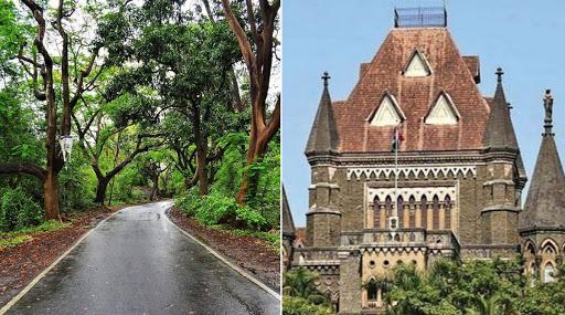 Aarey Protest: वृक्ष तोड निर्णयात तातडीने फेरविचार करण्याची मागणी मुंबई उच्च न्यायालयाने फेटाळली