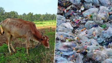 धक्कादायक! तामिळनाडूमध्ये शस्त्रक्रिया करून गायीच्या पोटातून काढले 52 किलो प्लास्टिक