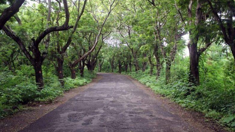Mumbai Metro Car Shed: पर्यावरणप्रेमींना झटका; 'आरे कॉलनी' बाबत न्यायालयाच्या निर्णयानंतर ताबडतोब झाडे तोडण्यास सुरवात (Watch Video)