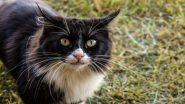 सातारा: मांजरांवरुन दोन सख्खा भावांमध्ये पेटला वाद; मारहाणीनंतर गाठले पोलिस स्टेशन