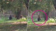 दिल्ली: कुंपण ओलांडून सिंहाच्या पिंजऱ्यात तरुणाने घेतली उडी; त्यानंतर जे घडले... (Video)