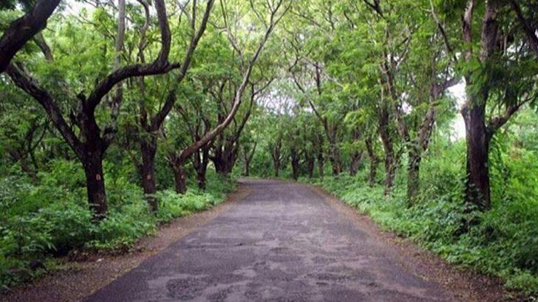 गुजरात ते दिल्लीपर्यंत उभारली जाणार 5 किमी रुंद 'ग्रीन वॉल ऑफ इंडिया'; Global Warming चा सामना करण्यासाठी केंद्र सरकारची योजना
