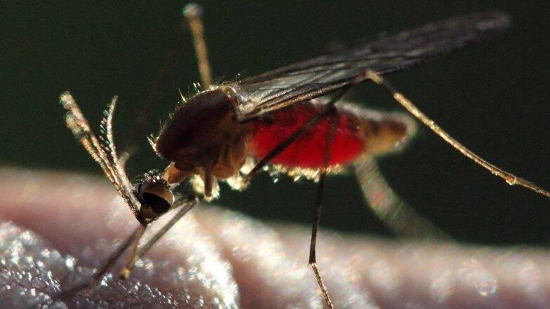 Dengue Safety Tips: डेंग्यूचा ताप जीवघेणा ठरण्याआधीच त्यापासून सुरक्षित राहण्यासाठी आजमवा या खास टीप्स