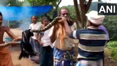Video: भल्या मोठ्या अजगराने त्याच्या गळ्याला घातला वेटोळा, आजूबाजूच्या नागरिकांमुळे थोडक्यात वाचले प्राण