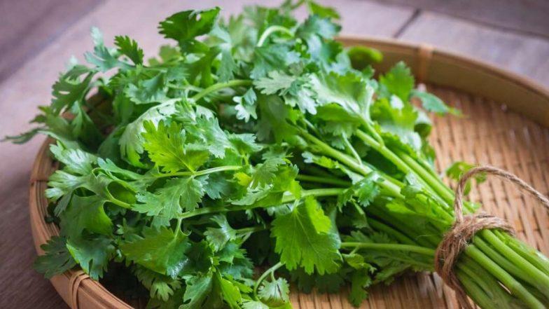 राज्यातील अवकाळी पावसामुळे भाज्या महागल्या, कोथिंबीर जुडीचे दर 80 रुपयांवर