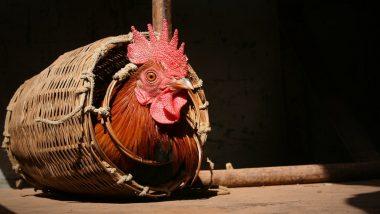 बिहार: कोंबड्याची हत्या, सात जणांवर गुन्हा दाखल, पोस्टमार्टमही झाले; पोलिसांकडून तपास सुरु