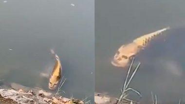 आश्चर्यम्! तलावात आढळला मानवी चेहरा असलेला मासा; टुरिस्टची उडाली भांबेरी (Watch Video)