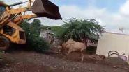 पिसाळलेल्या बैलाला आवरण्यासाठी जेसीबी ने चिरडून केली या मुक्या जनावराची क्रूर हत्या, व्हिडिओ पाहून तुमचाही राग होईल अनावर (Watch Video)