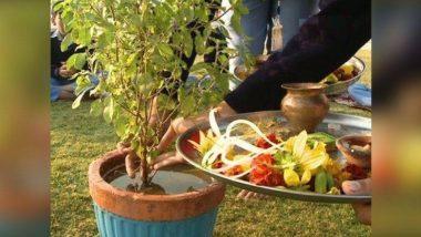 Tulsi Vivah 2019 Shubh Muhurat: कार्तिकी द्वादशी दिवशी तुळशी- शाळीग्रामच्या विवाहाचे सनई चौघडे वाजतील 'या' मुहूर्तावर