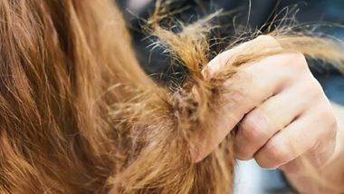 Hair Care Tips: केसांना फाटे फुटण्याच्या समस्येवर '5' झटपट घरगुती उपाय