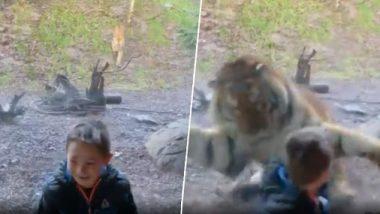 प्राणीसंग्रहालयात वाघाचा लहान मुलावर झडप घालण्याचा प्रयत्न; पाहा 'कसे' वाचले चिमुरड्याचे प्राण