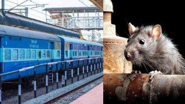 पश्चिम रेल्वेचा अजब कारभार; दिवसाला 5 उंदीर मारण्यासाठी रोजचा खर्च 14 हजार रुपये; तीन वर्षात तब्बल 1.52 कोटी फस्त