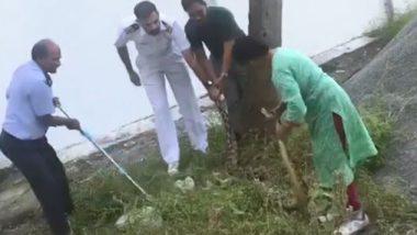 फक्त वासावरून सापाचे ठिकाण ओळखणारी महिला; सहज पकडला तब्बल 20 किलोचा अजगर (Video)