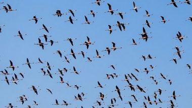 फ्लेमिंगो पक्षांचे मुंबईत आगमन: BMC ने शेअर केला फोटो; नयनसुख घेण्यासाठी 'महाराष्ट्र निसर्ग उद्याना'ला भेट द्या