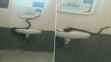 तामिळनाडू: भारथिअर युनिवर्सिटीमधील मुलींच्या वसतीगृहातील बाथरूममध्ये 7 फूट कोब्रा; पहा व्हिडिओ