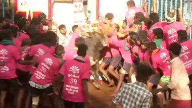 Jallikattu 2020: अवनियापुरम येथे कडक सुरक्षेत जलीकट्टू खेळाला सुरुवात; यंदा 700 बैल होणार सहभागी