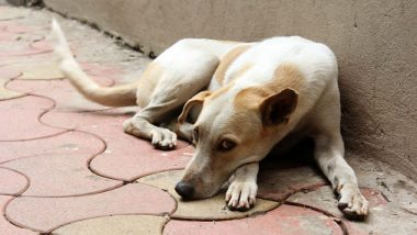 नागपूर: घरात 2 पेक्षा अधिक कुत्रे पाळणे पडेल महागात? महापालिकाने घेतला मोठा निर्णय