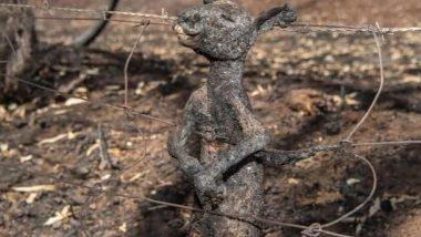 ऑस्ट्रेलियात जंगलात लागलेल्या आगीत 48 कोटी प्राणी आणि पक्षांचा होरपळून मृत्यू