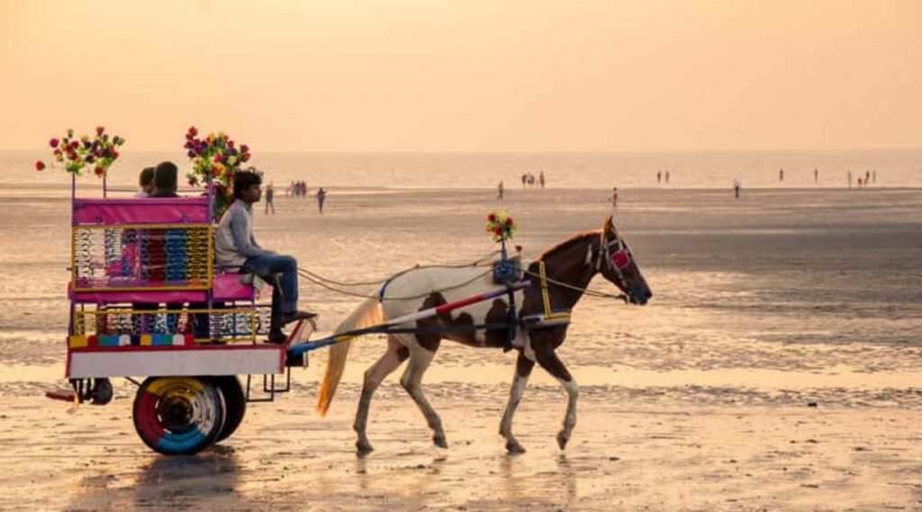 अलिबाग येथे घोडागाडीची समुद्रातून सफर, पशुप्रेमींनी केली जिल्हाधिकाऱ्यांकडे तक्रार दाखल