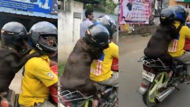 अहो आश्चर्यम! चक्क हेल्मेट घालून कुत्र्याने केला दुचाकीवरून प्रवास; सोशल मीडियावर Video व्हायरल