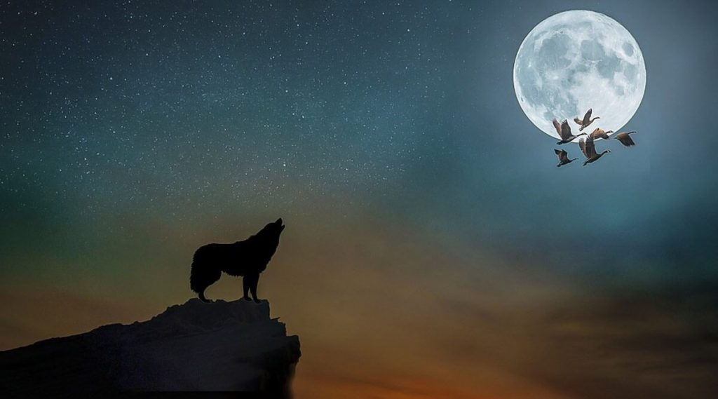 Hunter's Blue Moon 2020 Timings and How to Watch: 31 ऑक्टोबरच्या रात्री हंटर्स ब्लू मुन किती वाजता, कुठे, कसा बघाल?