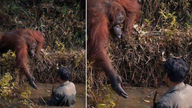 दलदलीत अडकलेल्या तरुणाला माकडाने दिला मदतीचा हात; रेस्क्यू ऑपरेशन करतानाचा 'हा' फोटो सोशल मीडियावर होतोय व्हायरल