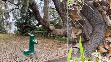 फ्लोरिडा पार्क मध्ये मोठ्या संख्येने Sex करणा-या सापांच्या भीतीपायी बंद ठेवण्यात आला गार्डनचा काही भाग