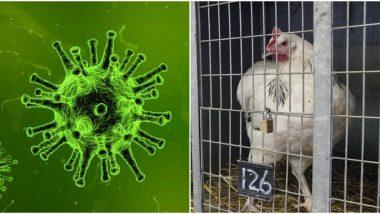 Coronavirus: कोरोना व्हायरस अफवांचा चिकन बाजाराला फटका, देशभरात मागणी 50 तर दर 70 टक्क्यांनी मंदावले