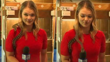 ऑस्ट्रेलियातील रिपोर्टरच्या खांद्यावर अचानक पडला साप, त्यानंतर जे घडलं ते तुम्हीचं पहा; Watch Video