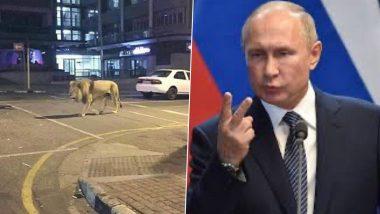 Fact Check: रशियाचे राष्ट्राध्यक्ष  Vladimir Putin यांनी रस्त्यावर 800 वाघ, सिंह सोडल्याची पोस्ट सोशल मीडियात व्हायरल; काय आहे या मागील सत्यता?