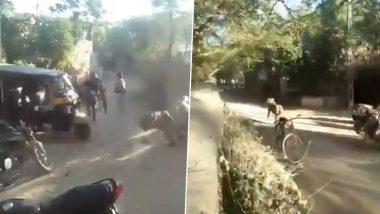 गुजरात मधील माधवपूर गावातून सिंहाची भरधाव रपेट; पहा Viral Video