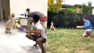 Video: श्रेयस अय्यर ने क्वारंटाइनमध्ये कुत्रासोबत केली बॅटिंग प्रॅक्टिस, केन विल्यमसन ची नकल करण्याच्या प्रयत्नातझाला फेल