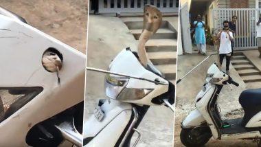 Scooty च्या हँडल मध्ये फणा काढून बसला होता कोब्रा साप; अंगावर काटे आणणारा 'हा' व्हिडीओ सोशल मीडियावर व्हायरल (Watch Video)
