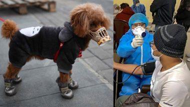 धक्कादायक: आता प्राण्यांनाही कोरोना व्हायरसचा धोका; Covid-19 ची लागण झालेल्या व्यक्तीच्या कुत्र्यालाही झाला Coronavirus