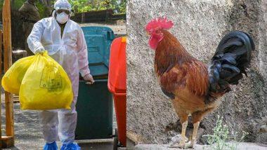Coronavirus in India: कोरोना व्हायरसमुळे चिकनची विक्री घटली; पालघर जिल्ह्यात नऊ लाख अंडी, दीड लाख कोंबड्या केल्या नष्ट
