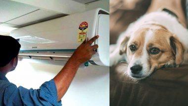 New Mumbai: पाळीव कुत्र्यांना वातानुकूलित वातावरणात ठेवण्यासाठी त्याने केली 6.98 लाखाची वीज चोरी; MSEDCL ने दंडासहित वसूल केले 7 लाख 22 हजार