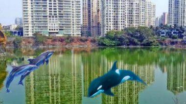 ठाणे, पवई तलावात डॉल्फिन दिसल्याचे खोटे फोटो आणि व्हिडिओ सोशल मीडियात व्हायरल