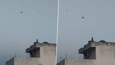 Monkey Flying Kite: गच्चीवर बसून चक्क माकडाने मजेत उडवला पतंग; लॉक डाऊनमध्ये वेगाने होत आहे Evolution, पहा Video
