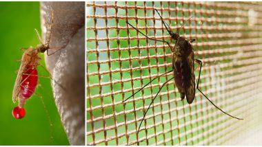World Malaria Day 2020: जागतिक मलेरिया दिन इतिहास, महत्त्व आणि वर्तमान