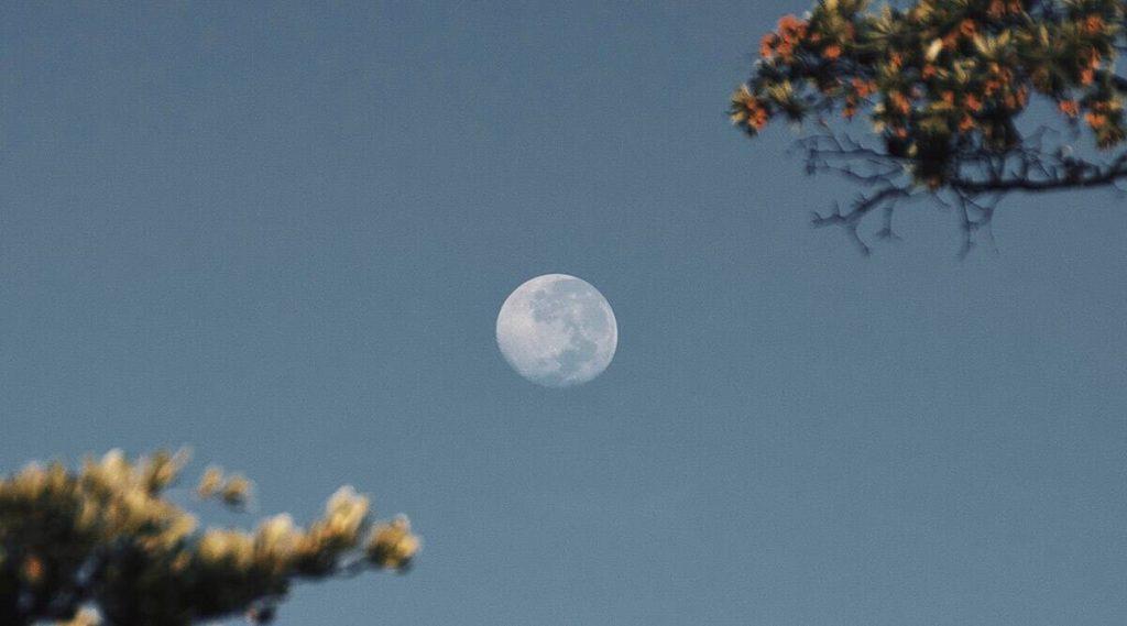 Super Flower Full Moon 2020 Date and Time: या महिन्यात दिसणार वर्षातील शेवटचा 'पूर्ण चंद्र'; जाणून घ्या तारीख आणि वेळ
