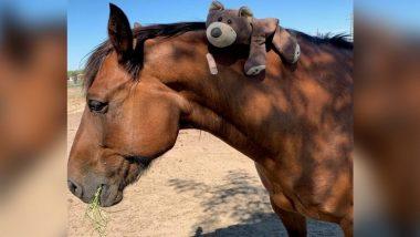 Coronavirus: रेड झोन मधून आलेल्या घोड्याला केले क्वारंटाईन; देशातील पहिलीच घटना